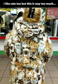 funny kitty coat animal fur