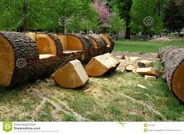 Log Crafts 25 Best Log Benches Ideas On Pinterest Rustic Cleavers Log