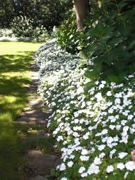 Small Picture 25 best White gardens ideas on Pinterest White flowers Garden