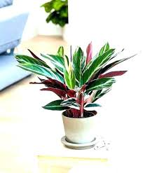 Small plant for office desk Gardening Small Plant For Office Desk Small Office Plant Best Office Plants Without Sunlight Indoor Plant No Ellaivoirecom Small Plant For Office Desk Ikimasuyo