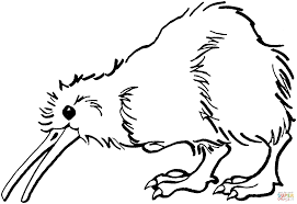 Small Picture Kiwi is Looking for Food coloring page Free Printable Coloring Pages