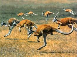 Природа растения и животные Австралии Животный мир Австралии