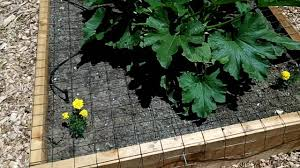 how to keep cats out of garden. Wonderful Keep How To Keep Cats Out Of The Garden Inside To Keep Cats Out Of Garden E