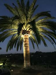 Palm Tree Lights Solar Canary Island Palm Lighting Palm Trees Landscaping