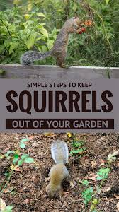 how to keep squirrels out of garden. How To Keep Squirrels Out Of Garden
