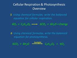 using chemical formulas write the balanced equation for cellular respiration