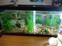 Decorative Betta Fish Bowls Betta than a Bowl betta fish aquariums betta tank inspiration 42
