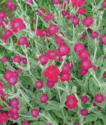 Small Picture Perennial Flower Garden Gardening Ideas