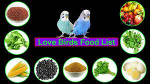Love Birds Food Lovebirds Food List
