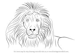 lion face drawing for kids.  Face Learn How To Draw A Lionu0027s Face Big Cats Step By  Drawing Tutorials With Lion For Kids