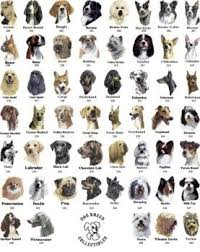 All Dog Breeds Chart All Dog Sale And Purchase Good Breed Orignial 8427860013