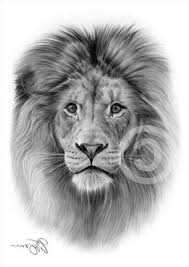 realistic lion face drawing. Perfect Drawing Pencil Drawings Animal Art Art Tattoos  Cat Intended Realistic Lion Face Drawing