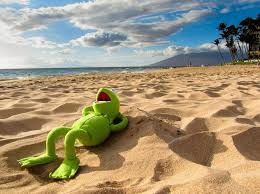 Image result for frog on the beach