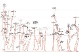 Bourbon Flavor Chart Chart The Family Tree Of Bourbon Whiskey Gq