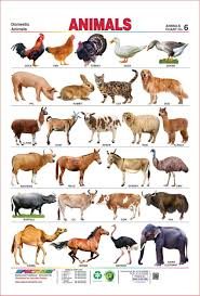wild animals chart.  Animals Amazoncom  Spectrum Laminated Educational Pre  School Kids Domestic  Animals Name Wall Chart Office Products With Wild R