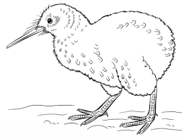 kiwi animal coloring pages