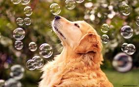 Dog Desktop Wallpapers - Top Free Dog ...