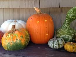 Halloween Pumpkin Patterns Magnificent Decoration