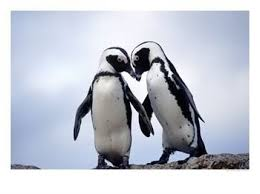 cute penguins in love. Modren Love I Am Feeling Very Lovey Right Now And Found Some Really Cute Penguin  Photos Have Mentioned Love My Husband Who Made Dinner AND Has Been Doing All The  Inside Cute Penguins In Love G