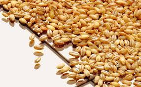 Compound Feed Plants - Amandus Kahl GmbH & Co. KG