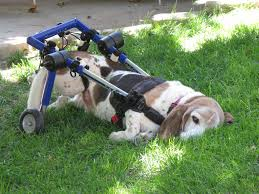 wheelchair and dog