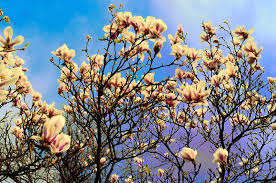 essay about spring season essay on spring season write an essay  essay on spring season spring season urdu essay mausam bahar ka my favourite season in