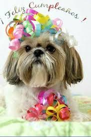 hello this is dog happy birthday. shih tzu dog art print by geri lavrov. hello this is happy birthday