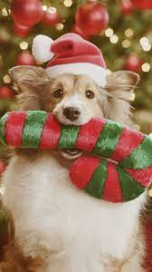 All wallpapers are optimized for android phones. Christmas Dog Wallpaper By Werewolf Fe Free On Zedge