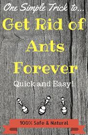 natural repellent for getting rid of ants