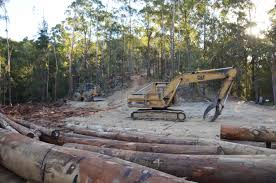 State Government Puppets Of The Logging Industry Following Passing
