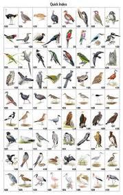 North America Bird Identification Guide Bing Images Bird