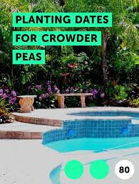 learn planting dates for crowder peas