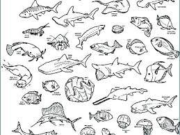 Animals Coloring Pages For Kindergarten Ocean Animals Coloring Pages