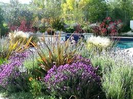 drought resistant garden. Drought Resistant Landscapes Tolerant Landscaping Modern Plants Landscape Design Garden