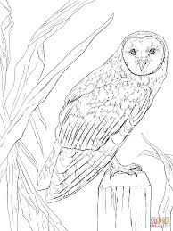 Small Picture Barn Owl coloring page Free Printable Coloring Pages
