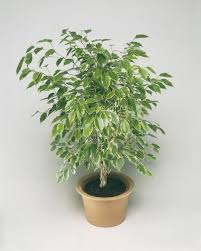 Зелените листа, нежните цветове и чудесните аромати подобряват настроението, разтоварват и успокояват, способстват за пълноценен отдих. Naj Izdrzhlivite Stajni Rasteniya Krasota Bez Usilie