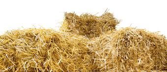 is straw safe for hamsters rodentlife