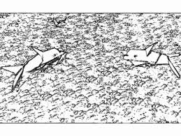 Dolfijnen Kleurplaat Geïnspireerd Kleurplaten Konijn In Hok Archidev