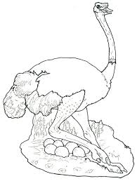 Small Picture Ostrich Hide Her Eggs Coloring Page Color Luna