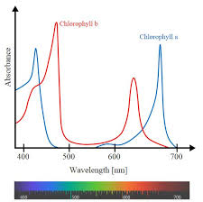 How Does Color Spectrum Affect Growing Weed Grow Weed Easy