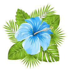 hibiscus flowers illustration beautiful blue hibiscus flowers blossom and tropical