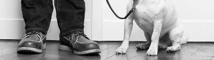 """Sie wird auch die """"kleine schwester der hundekrankenversicherung genannt. Hundehaftpflicht Versicherung Versichern Sie Ihren Hund Bei Der Vhv"""