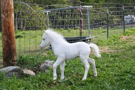 baby white horse. Exellent Baby Baby White Horse Intended E