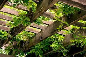 Best Climbing Plants For Trellises Arbors And PergolasClimbing Plant Trellis