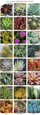 Identifying Types Of Succulents With Pictures