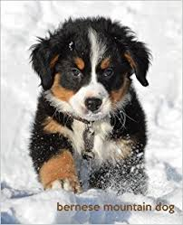 bernese mountain dog puppies. Contemporary Dog Buy Bernese Mountain Dog A Gift Journal For People Who Love Dogs  Dog Puppy Edition Volume 2 So Cute Puppies Book Online At Low Prices  In Puppies N