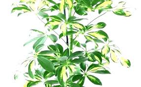 type of house plants types of indoor plants tall house best large houseplants home common 2
