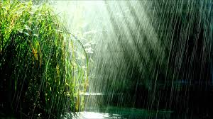 tropical rainforest raining. Delighful Tropical Inside Tropical Rainforest Raining YouTube