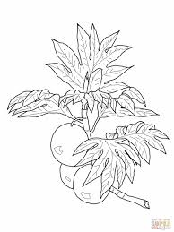 Breadfruit On Branch Coloring Page From
