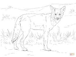 Small Picture Coyote coloring page Free Printable Coloring Pages